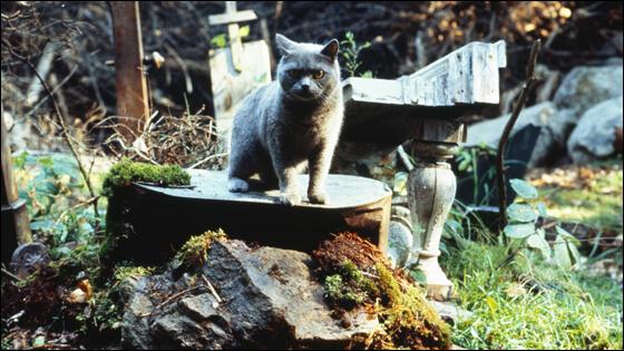 Gatto nel cimitero degli animali